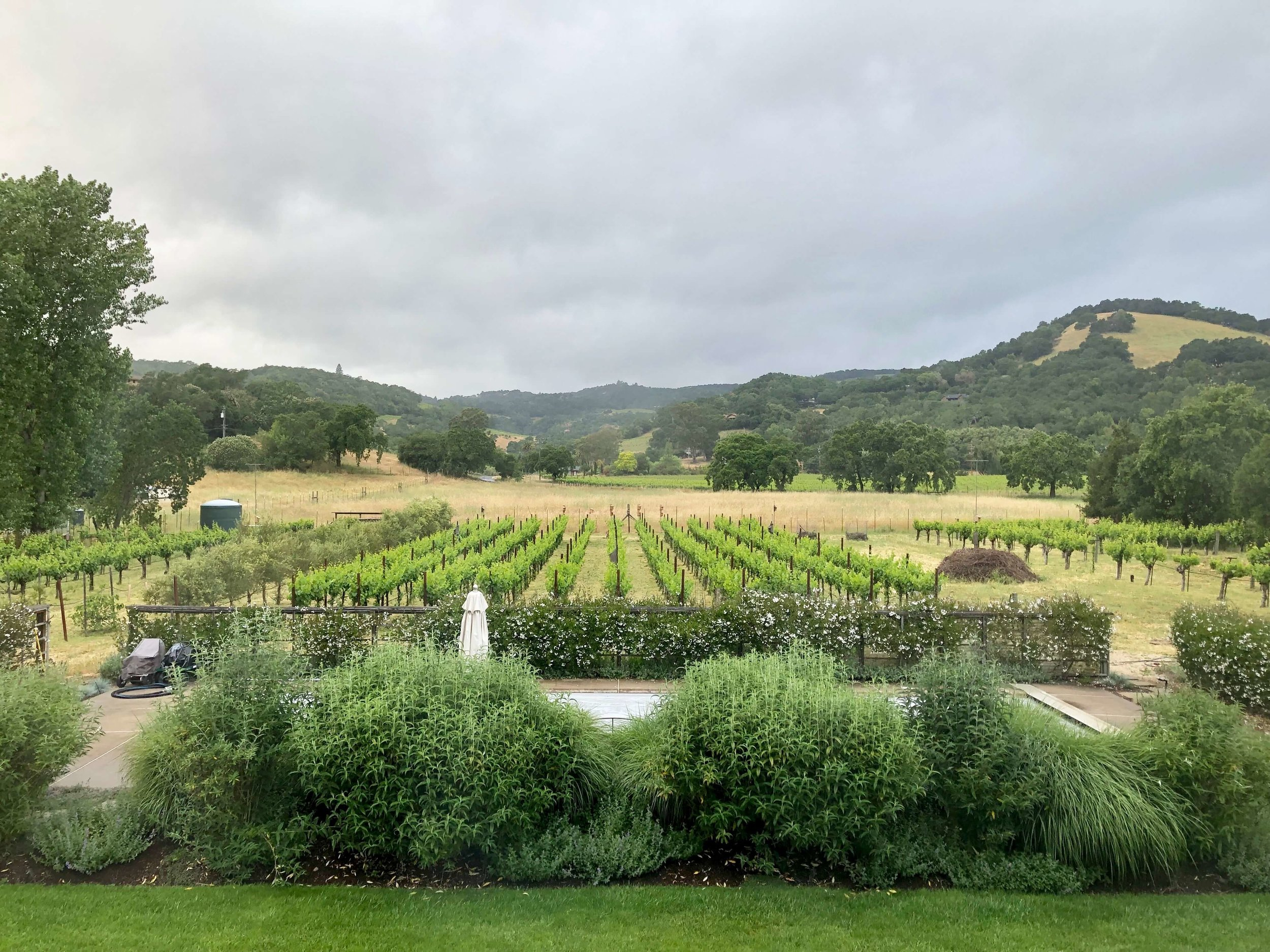 Stunning view out the back door of our Airbnb rental in Sonoma. There is a pool just beyond the shrubbery and lawn. #airbnb #winecountry