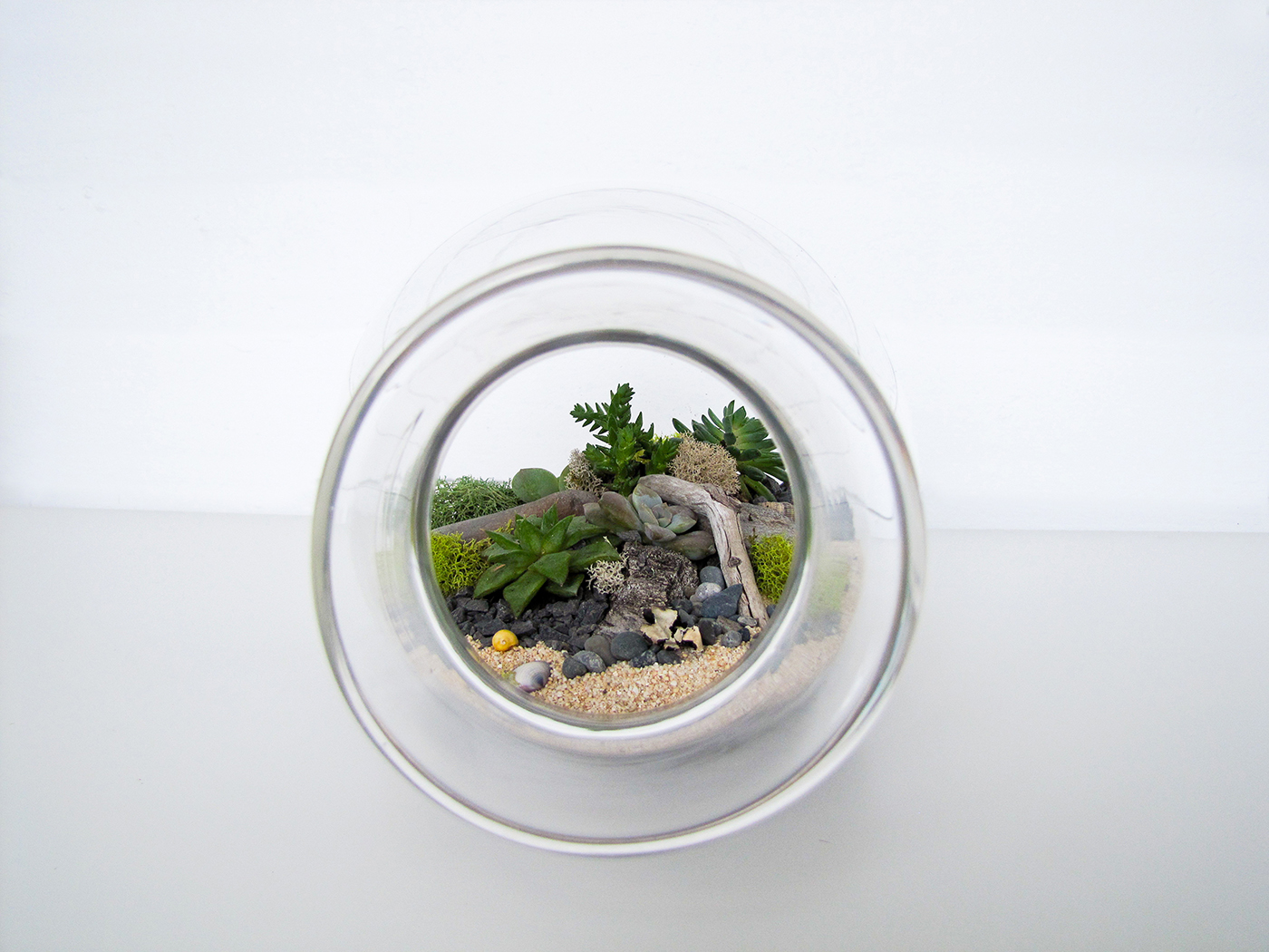 PLANT terrariums  will be at the  New Craft Coalition  show and sale this weekend.