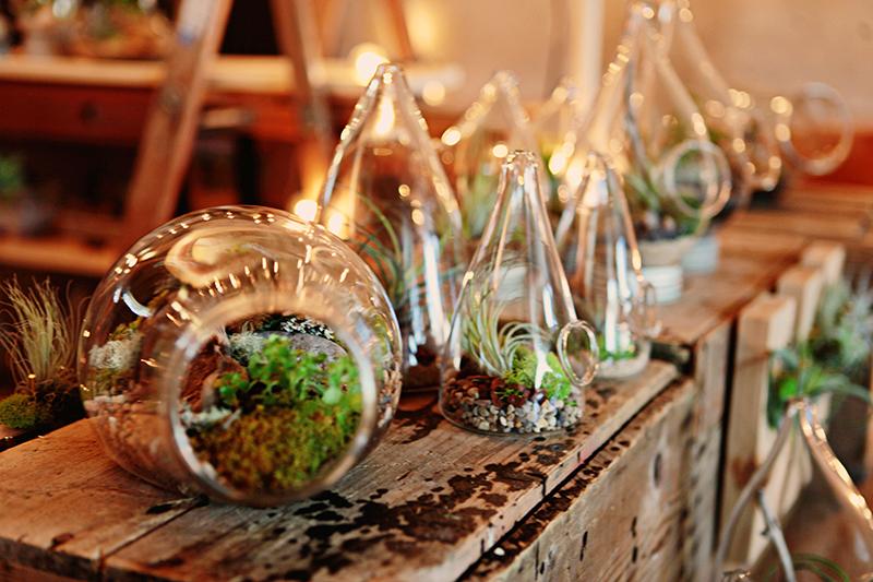 PLANT terrariums