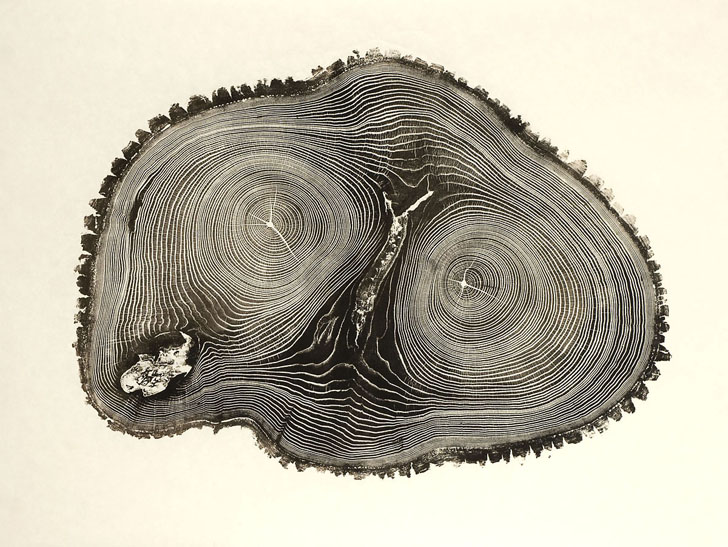 bryan-nash-gill-tree-prints-3.jpg