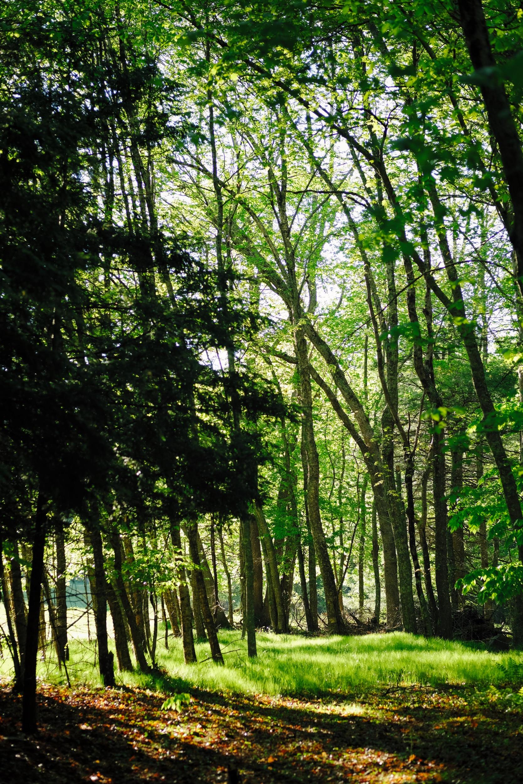 rhode_island_forest_light.jpg