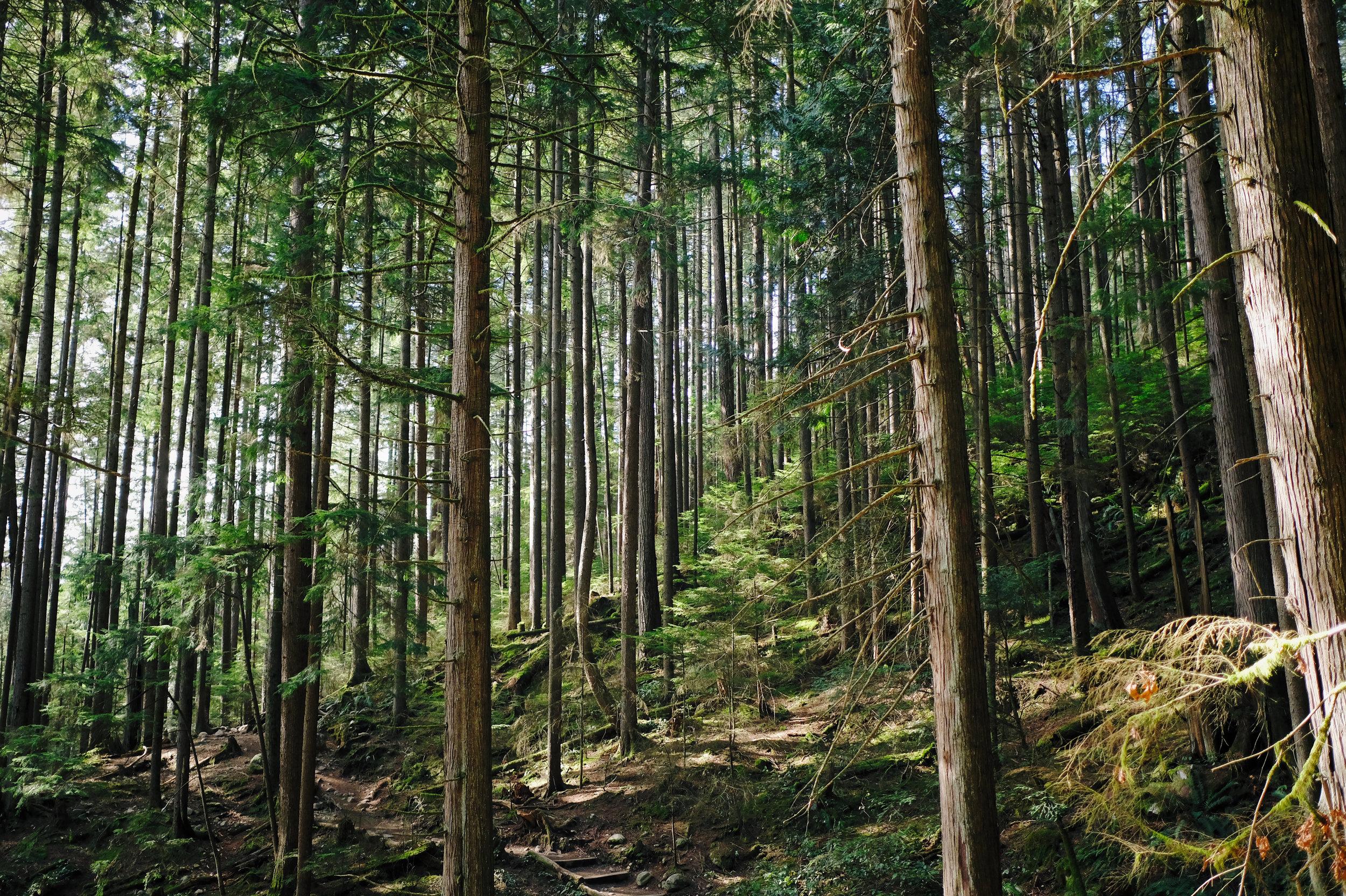 britsh_columbia_trees.jpeg