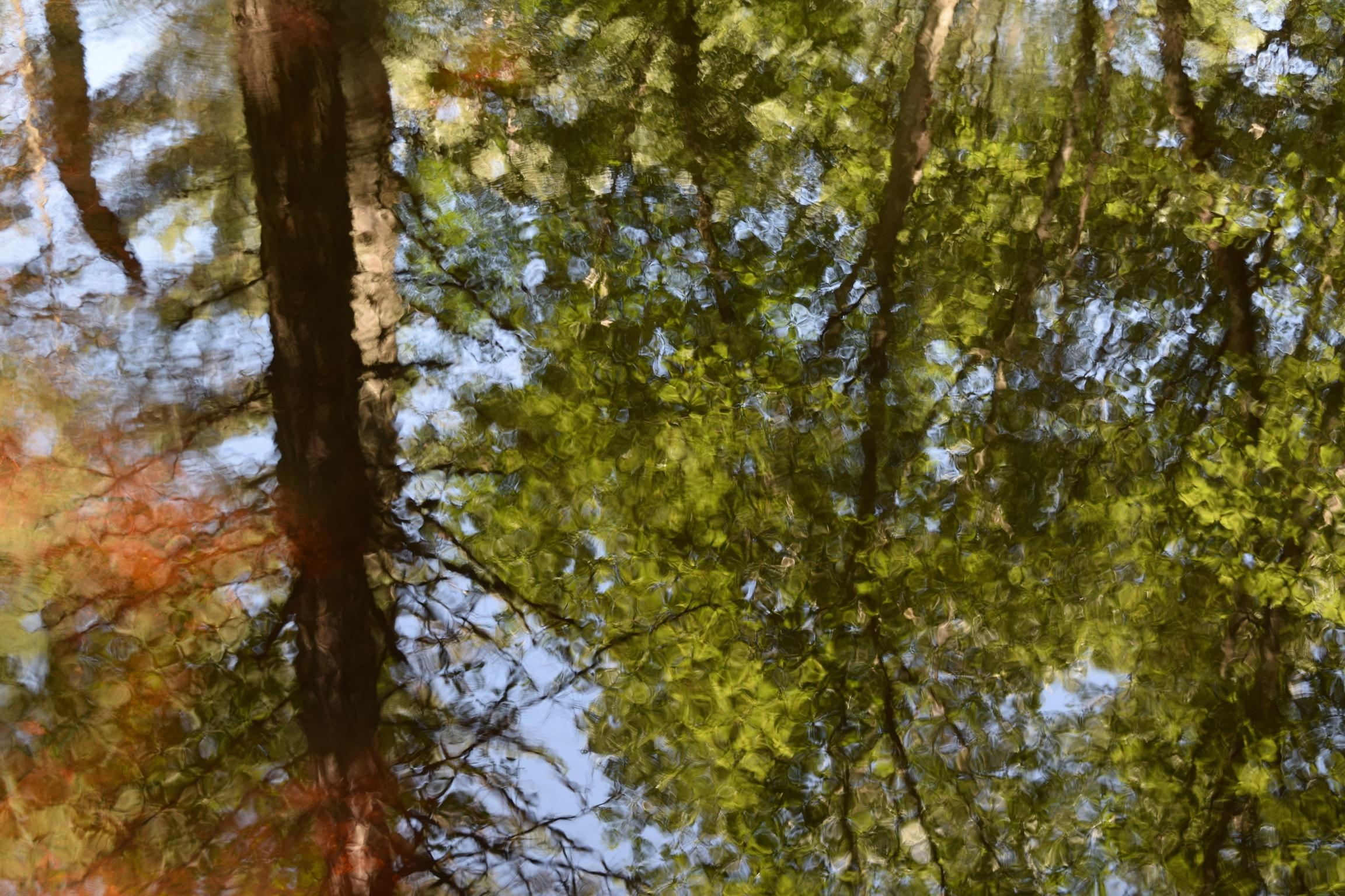dogwood_pond_reflection_color.jpg