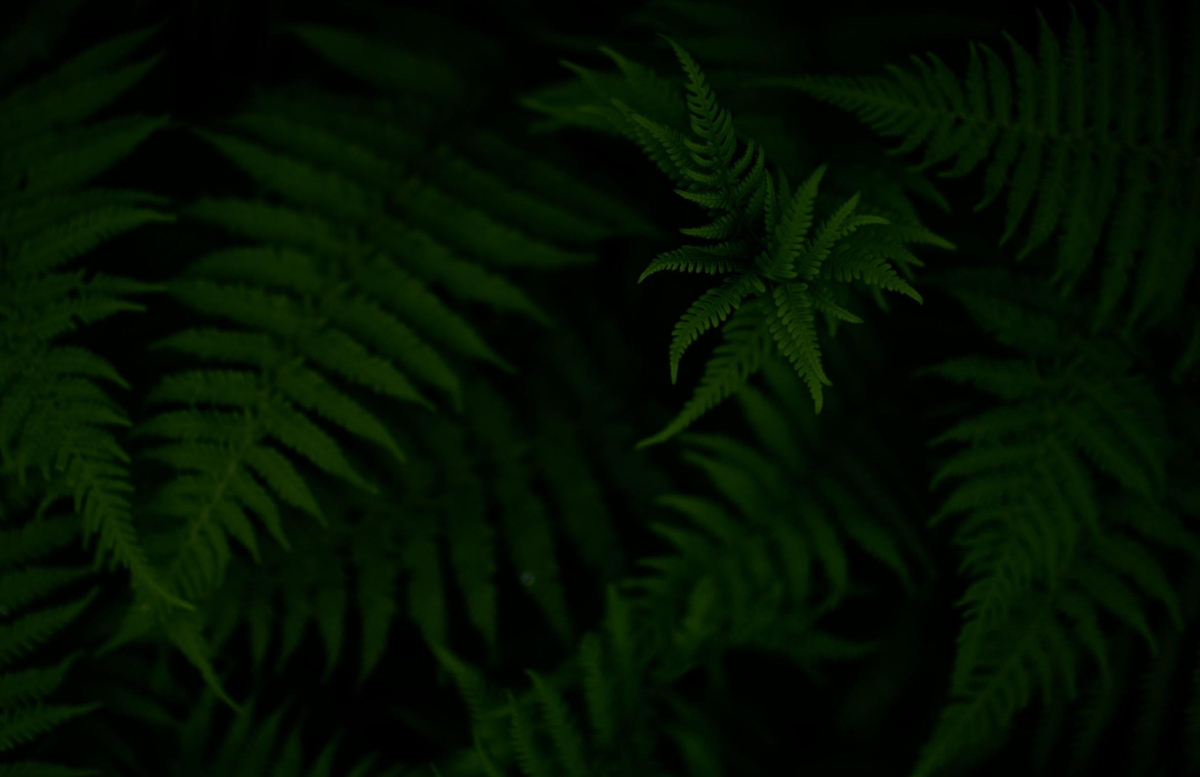 ferns_dark.jpg