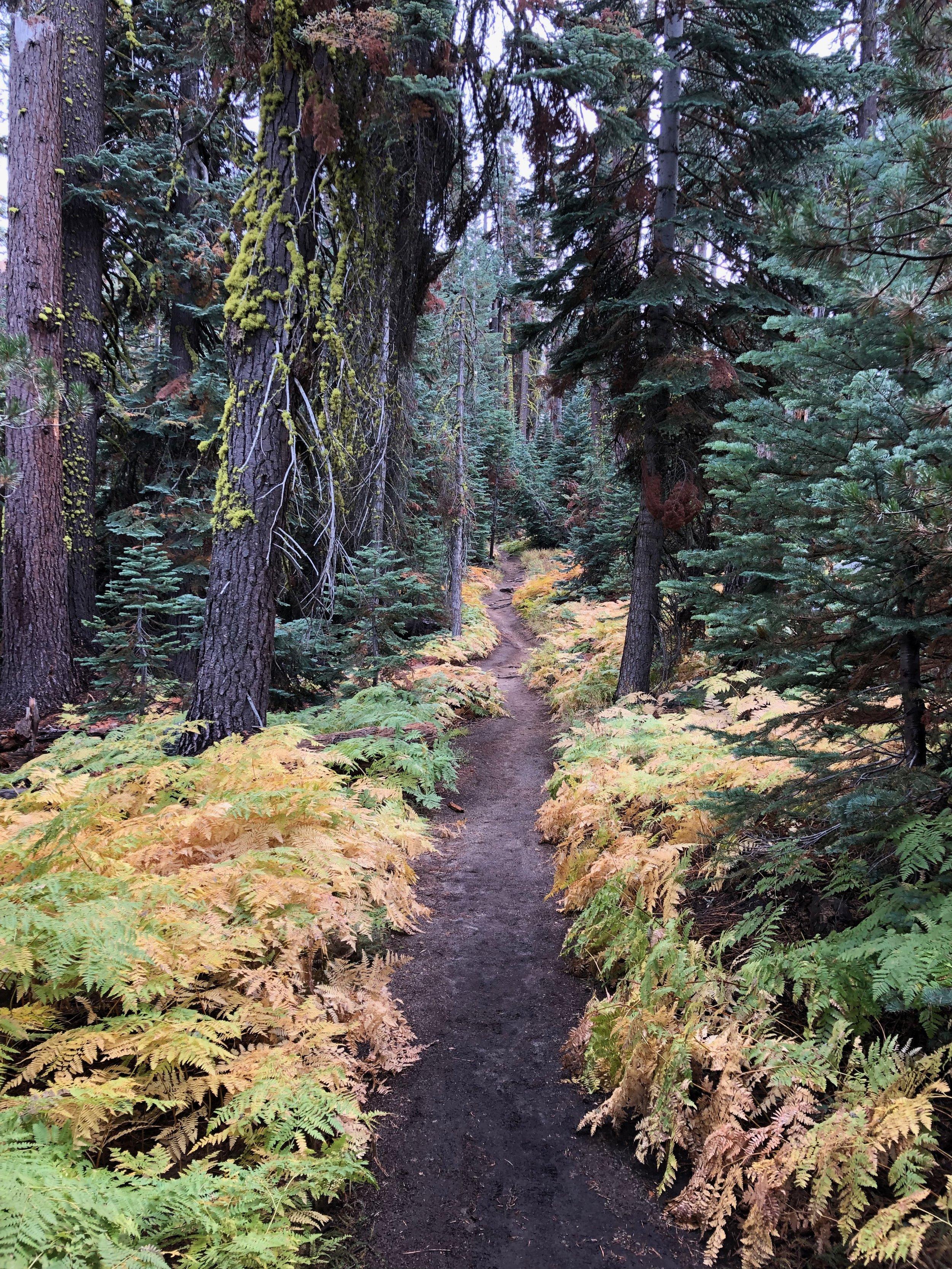taft_point_ferns_trail.jpeg