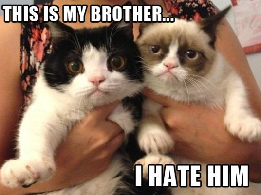 LOL-Grumpy-cat-brother_1.jpg