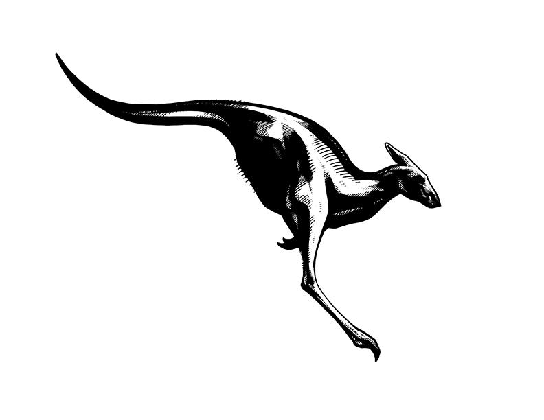 KangarooIllustration_PeterHan_72.jpg