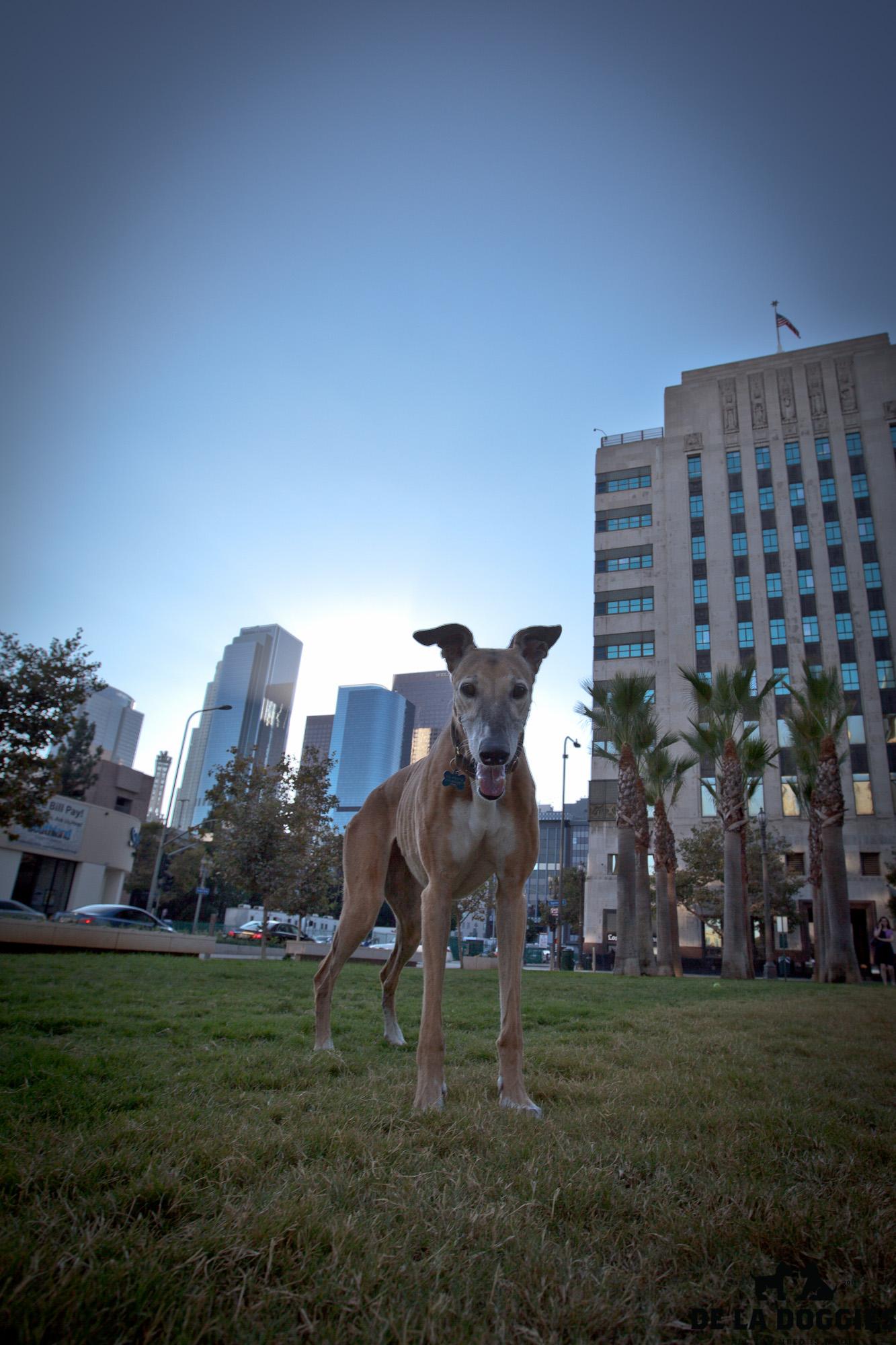 Greyhound_1-1.jpg