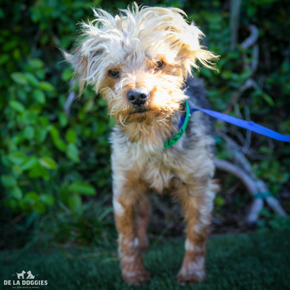 My name is Micheal A1532333, and I am a four year old yorkie mix with bladder stones,currently in medical. Can you take care of me?     1850 West 60th street Los Angeles, CA 90047 L.A. 90018 (213) 485-0214 (213) 485-0227 (213) 485-0303
