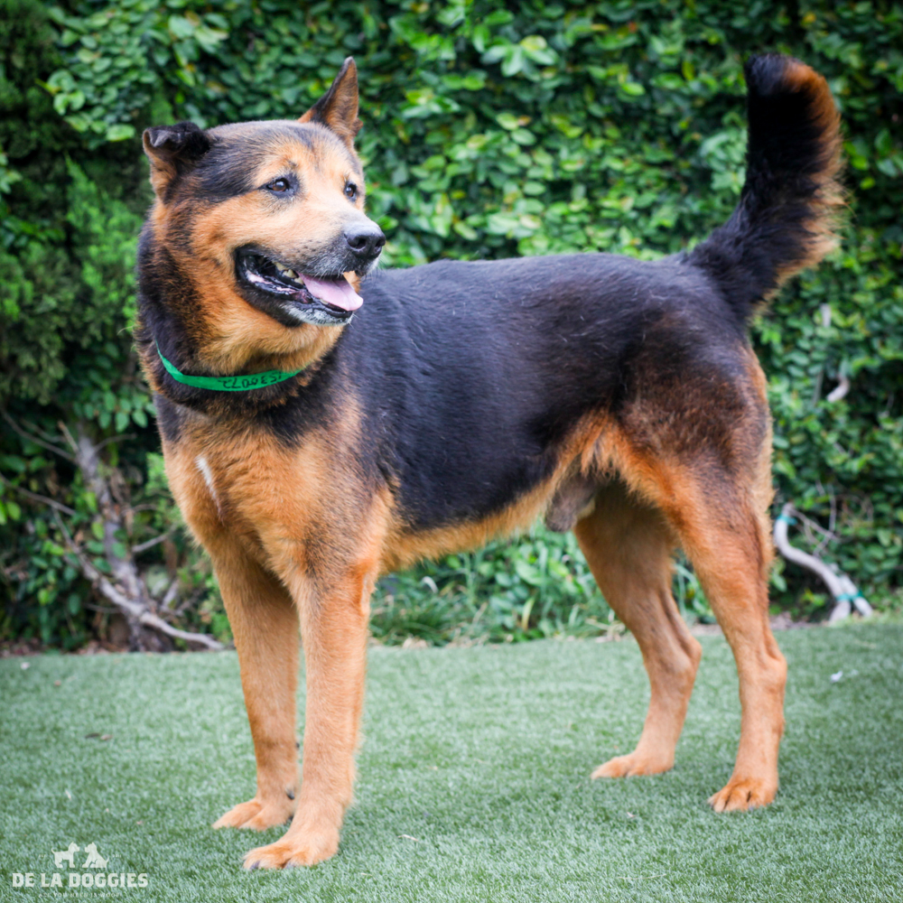 Andy A1530072
