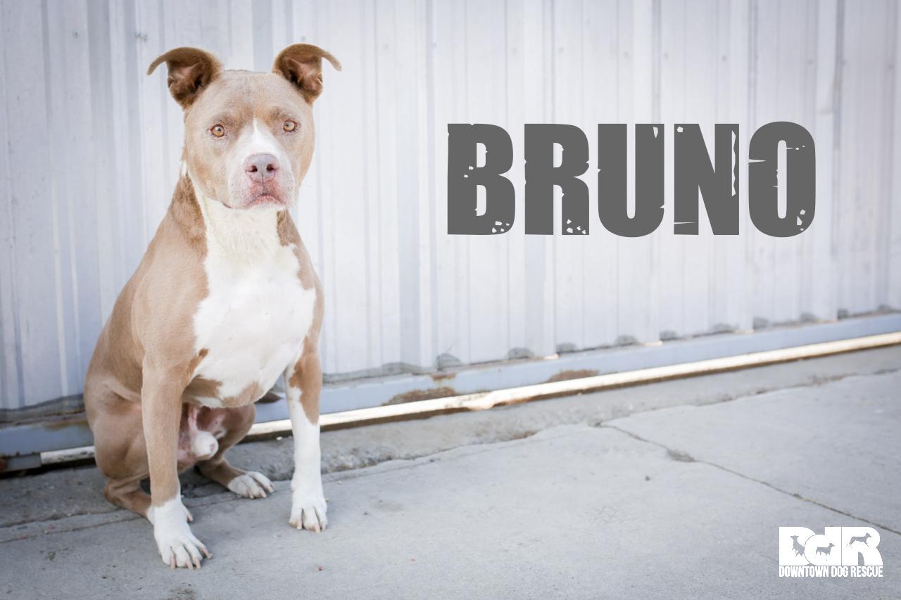 Bruno.jpg