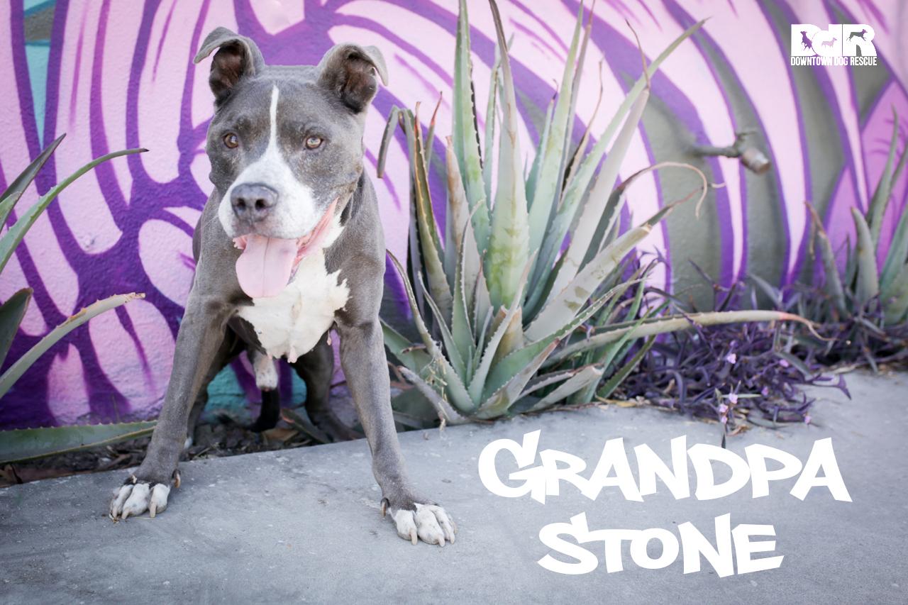GrandpaStone.jpg
