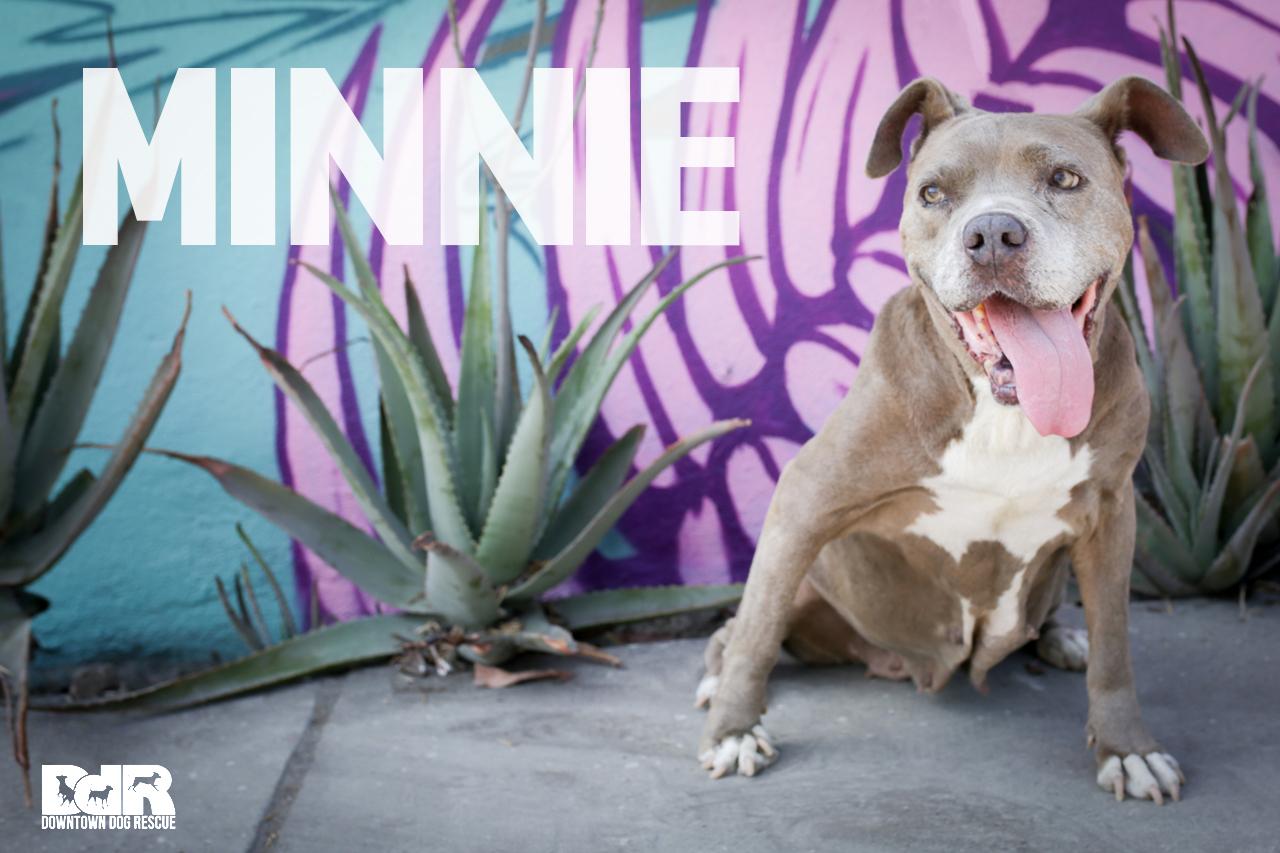 Minnie_2.jpg