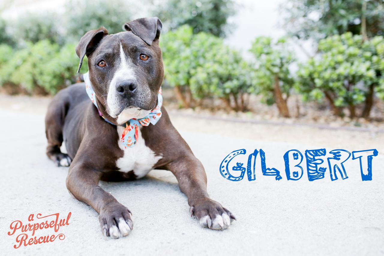 Gilbert_logo.jpg