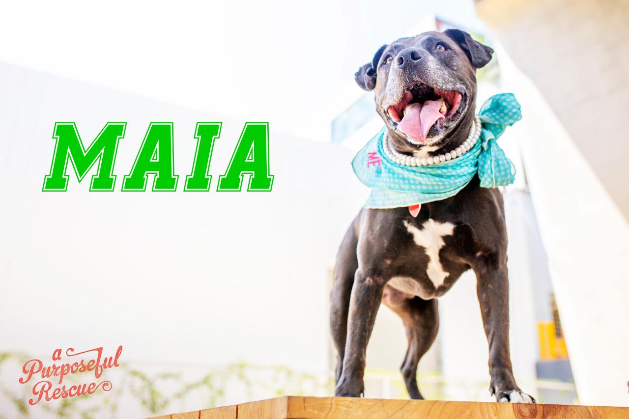 Maia.jpg