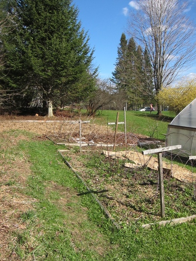 In addition to a big old garden bed and hoop house, the previous owners left us three lovely berry patches: raspberry, blueberry, and strawberry. We moved in at the tail end of strawberry season last summer, so I'm very much looking forward to fresh strawberries this year.