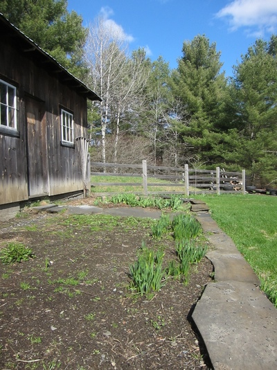 And, last but not least, the barn garden. Any day now this will be a patch of my all time favorites: daffodils. Then it will become the kids' garden space. Katherine wants to grow yellow peppers and pumpkins.