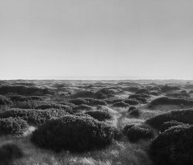 Covered Dunes   Ocean Shores, Washington  © Alan Wentworth