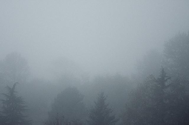 Dash Point Fog I   Dash Point, Washington  © Alan Wentworth