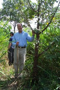 Photo: Advisory Board member Ned Symes stands with a spiny cedar tree in Panama