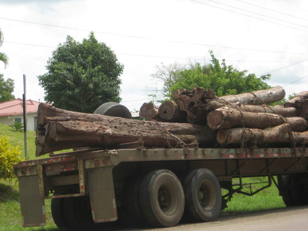 Photo of Cocobolo (rosewood) logs on their way to be milled into timber.