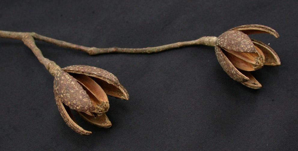 Amargofruta.jpg