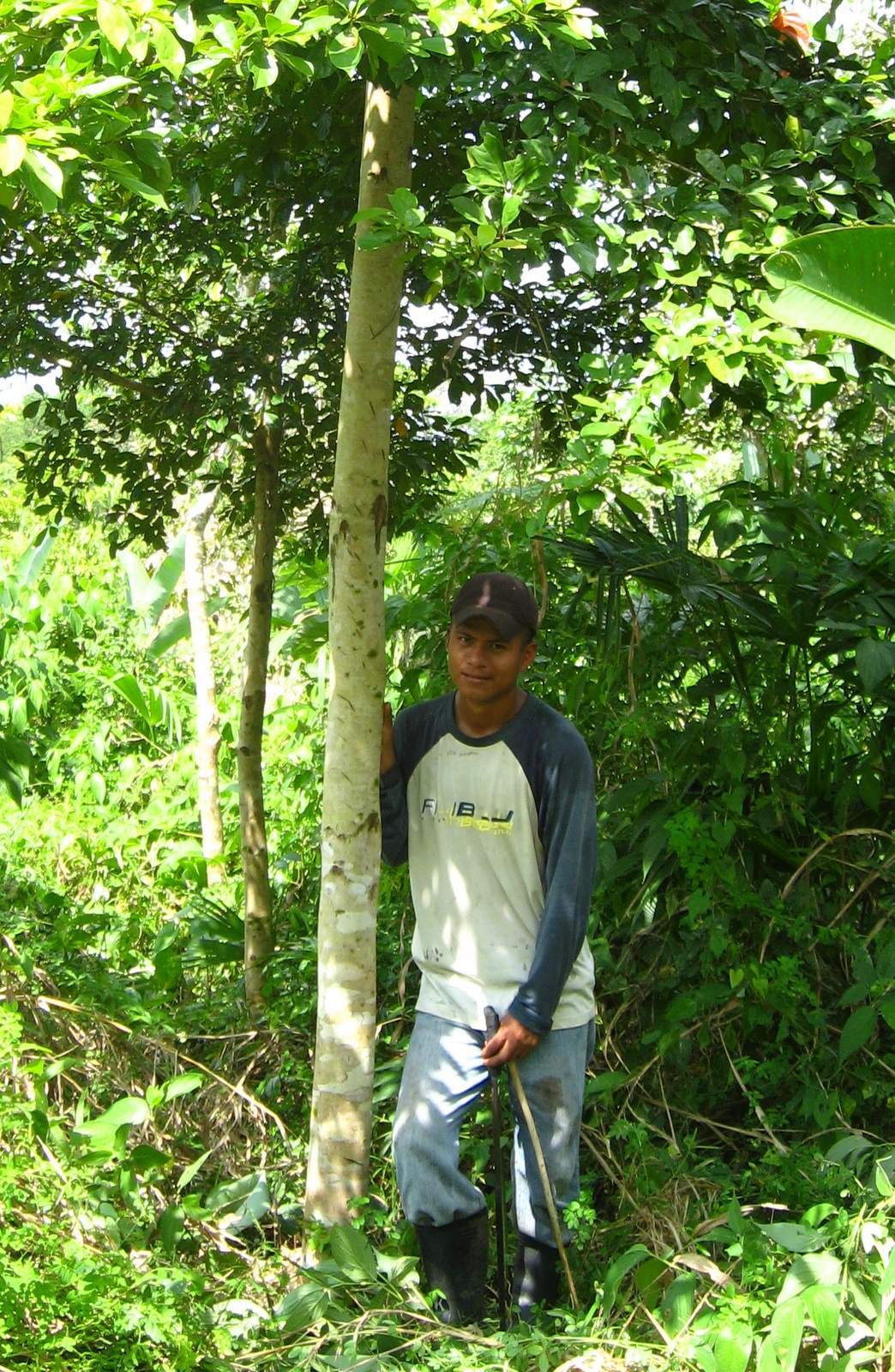 We let the understory regenerate between rows of trees to increase biodiversity and reduce the need for pesticides.