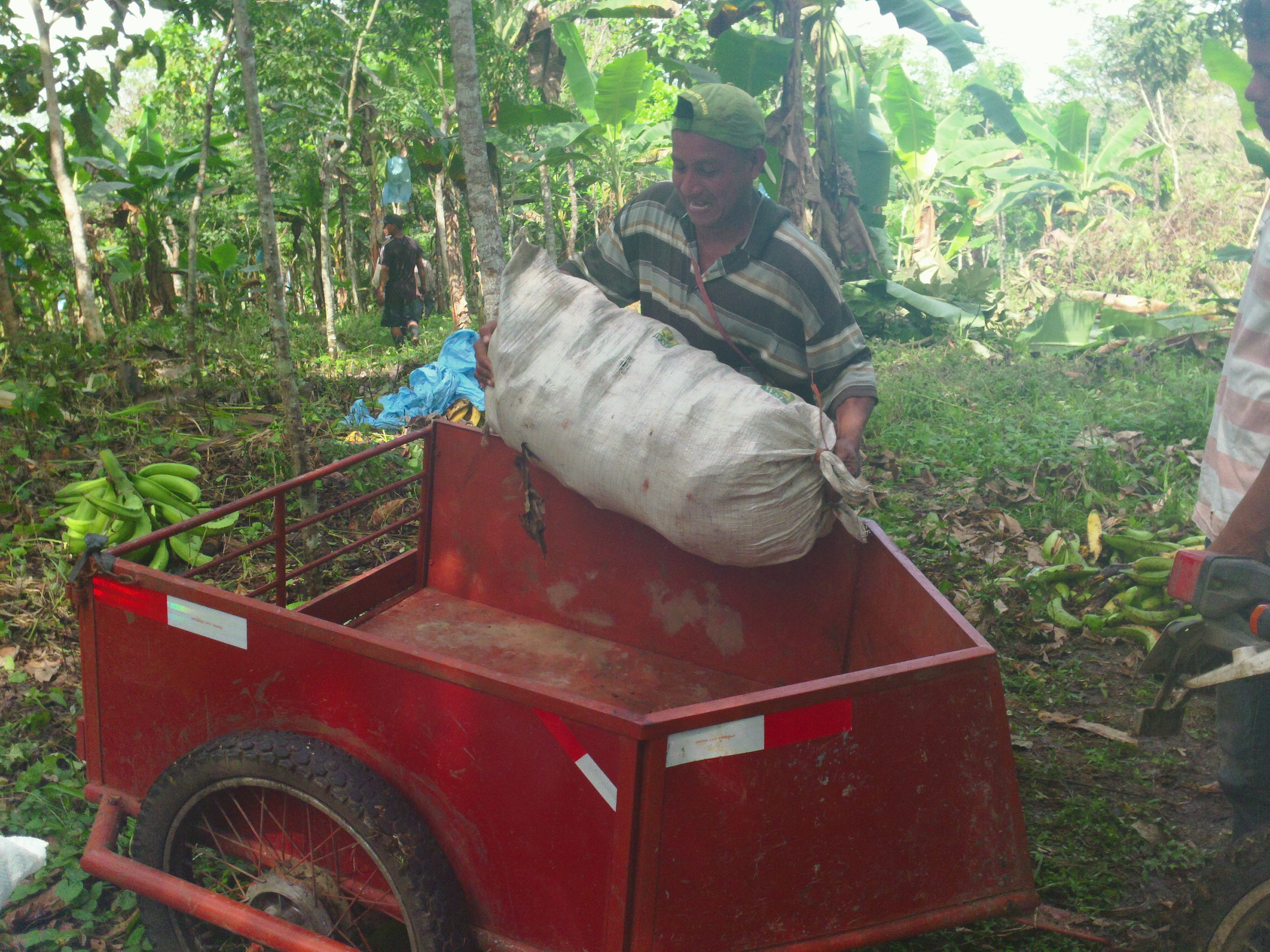 Yem loads a sack of plantains into the cart