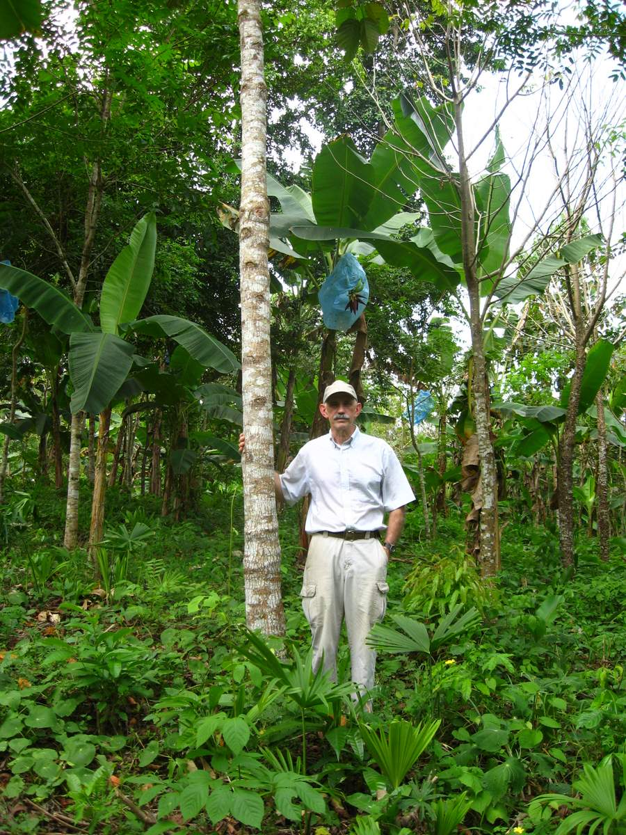 Investor stands with a six and a half year old zapatero (shoemaker) tree