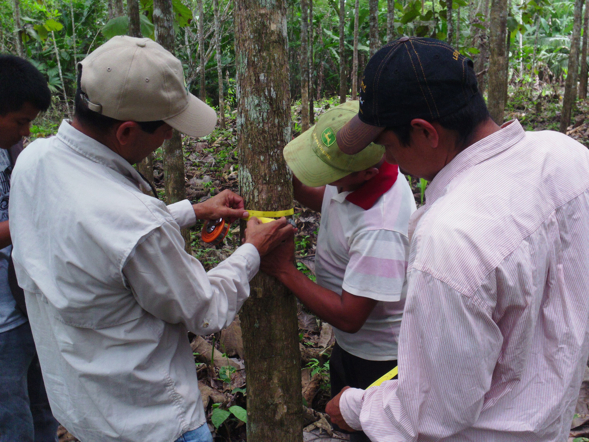 Carlos shows the team how to take tree diameter measurements.