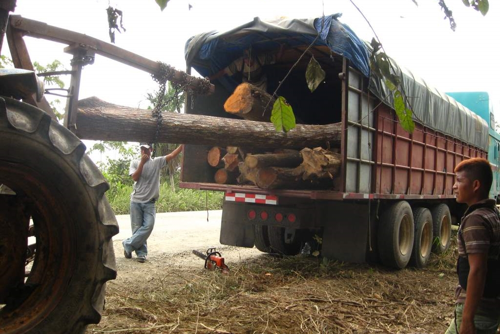 Loading logs from the Arimae Community Forestry project