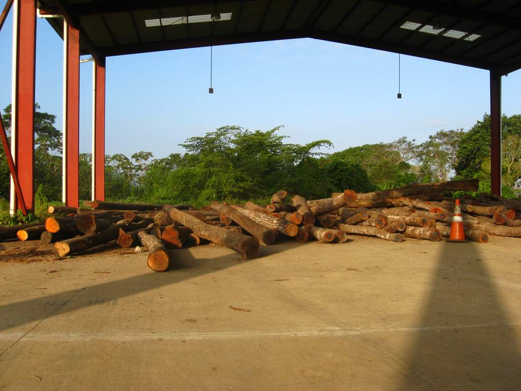 Logs delivered to the holding location