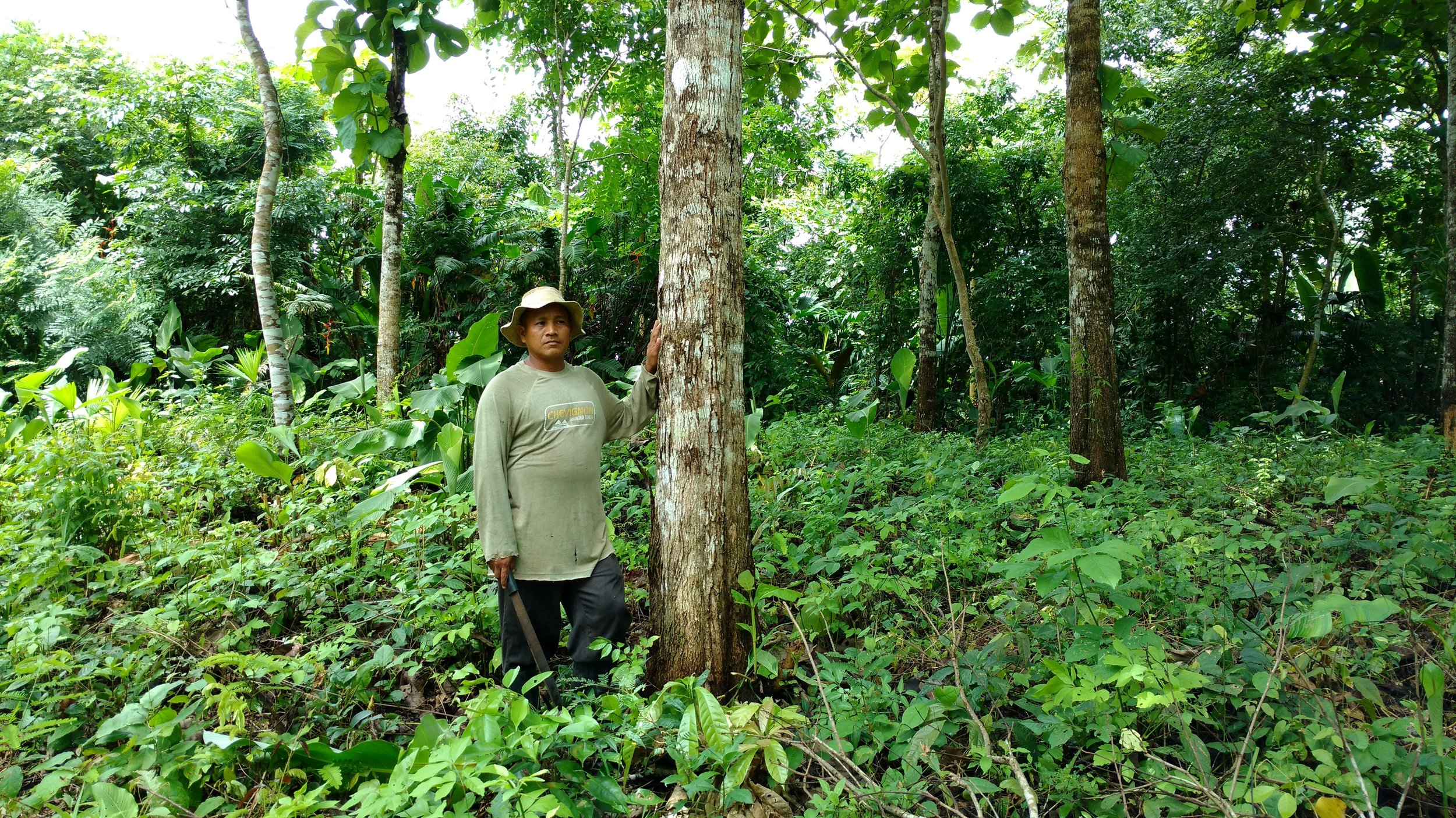 Yem standing with a 8-9 year old teak tree in Arimae