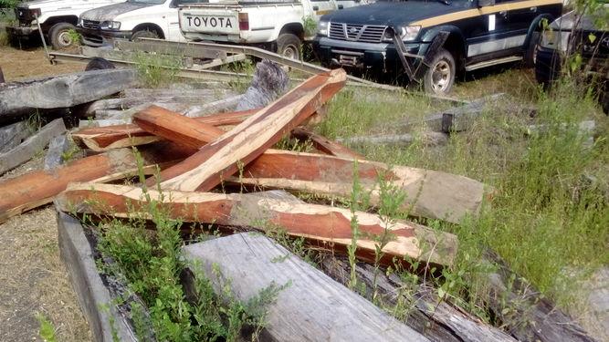 Decomissioned cocobolo logs in the Azuero province of Panama. Photo courtesy of La Prensa.