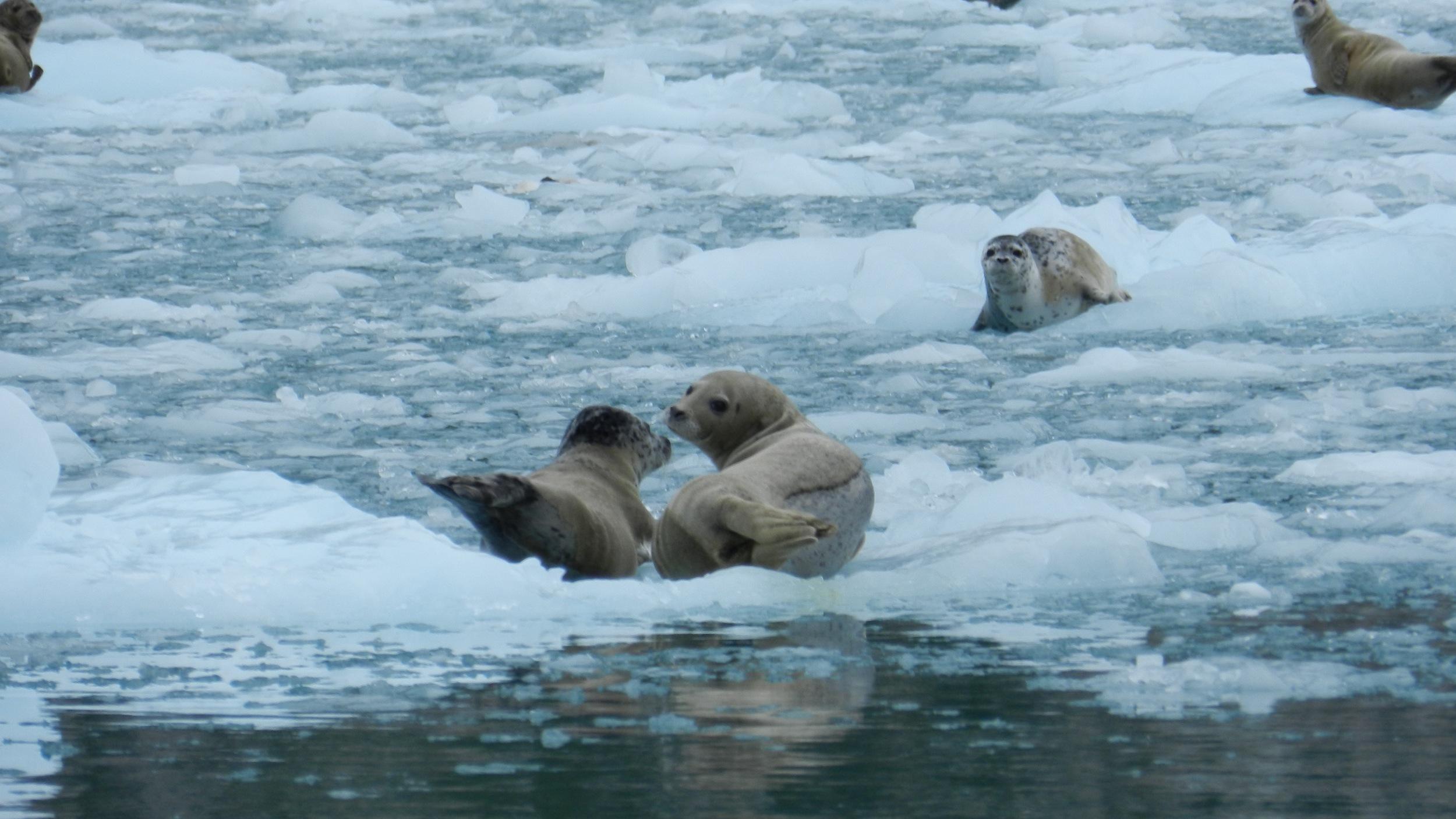Alaska06.jpg