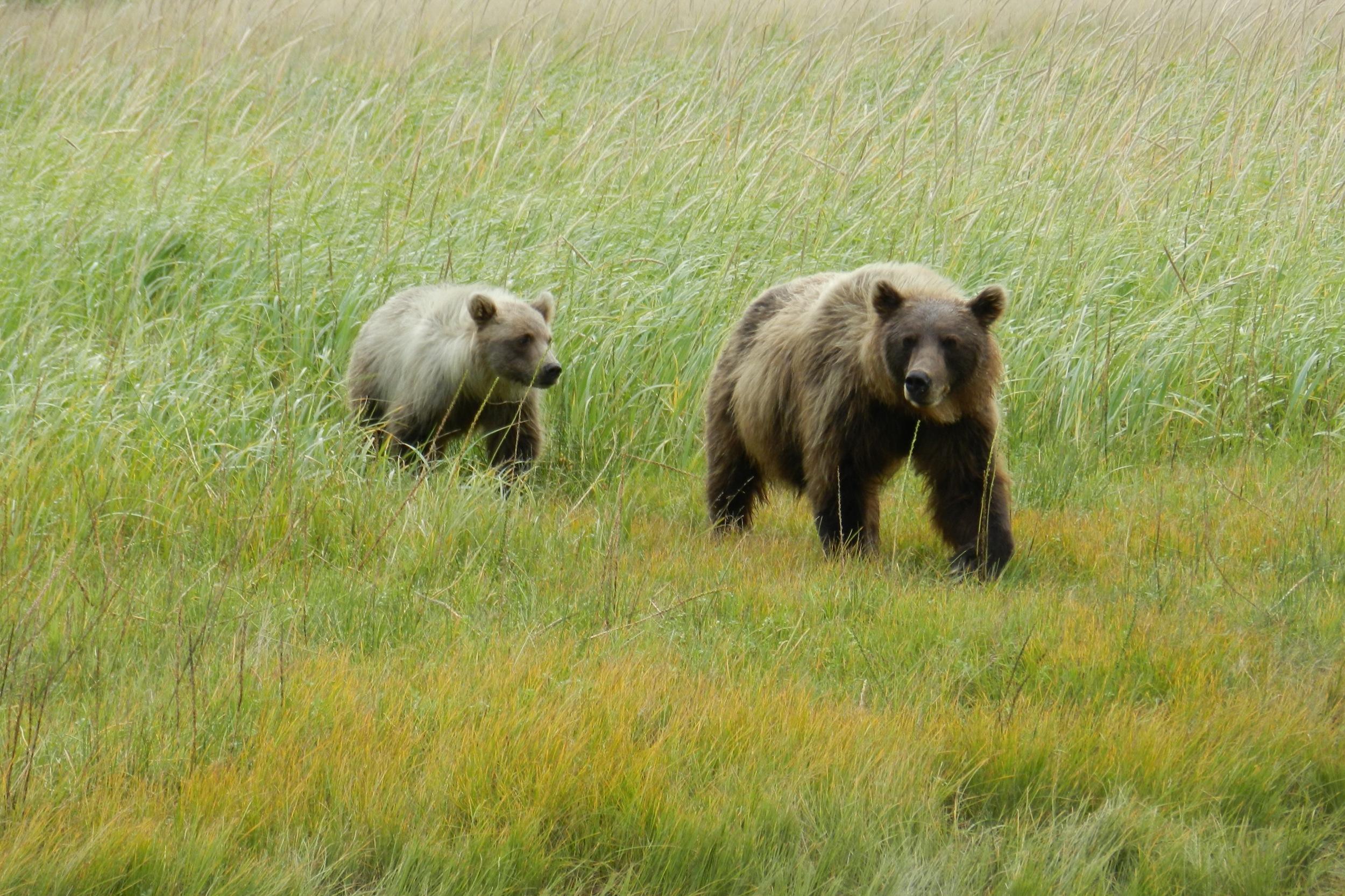 Alaska25.jpg