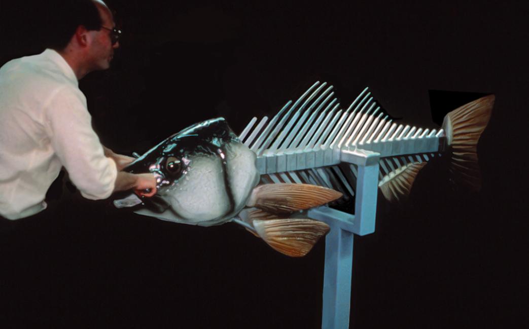 """interactive fish skeleton """"how do fish swim?"""", maritime aquarium, norwalk, ct"""