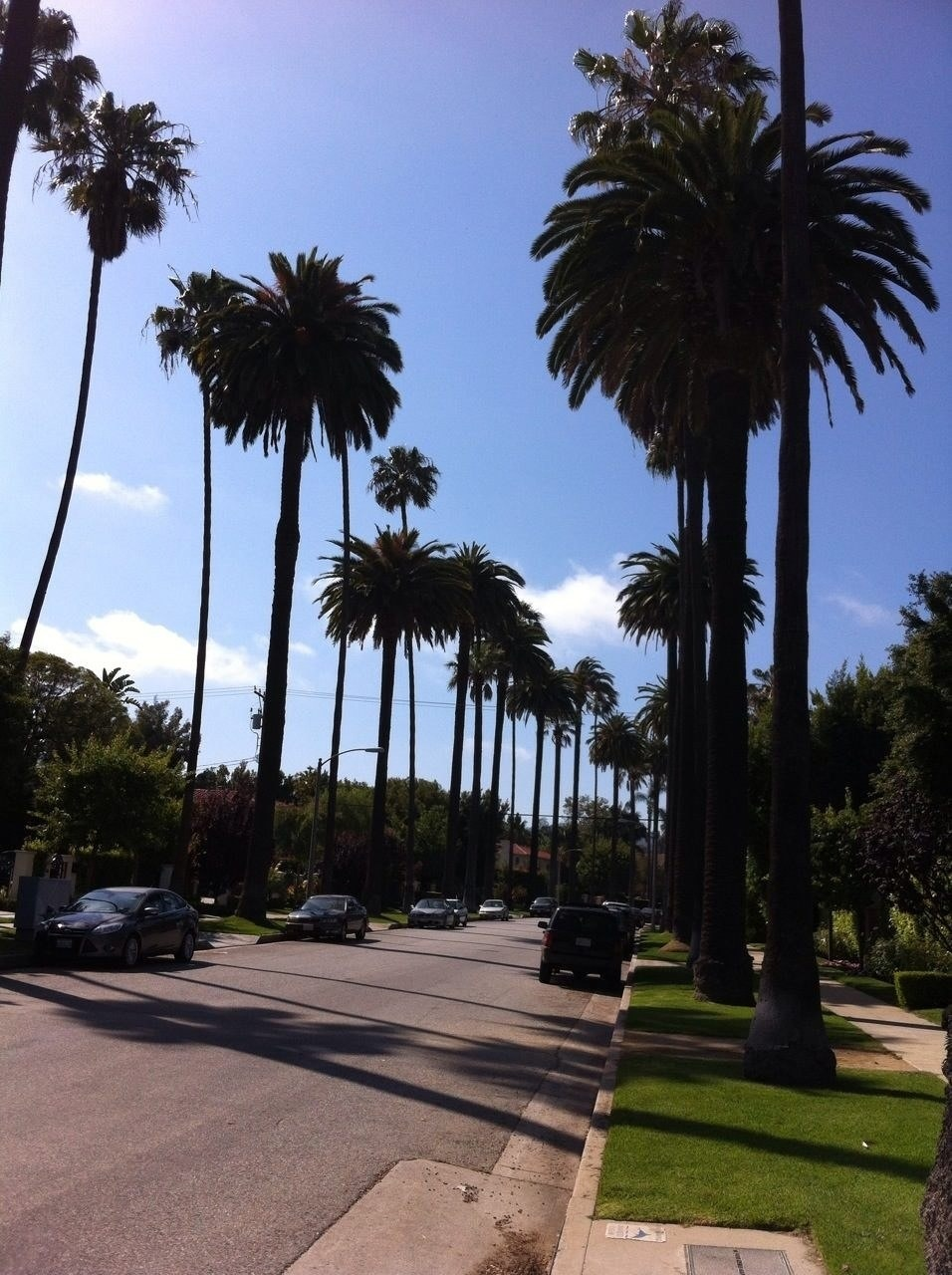 This is a very typical street in Beverly Hills - we see them on the TV shows all the time!