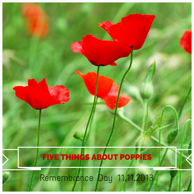 Five Things about Remembrance Day 11.11.13