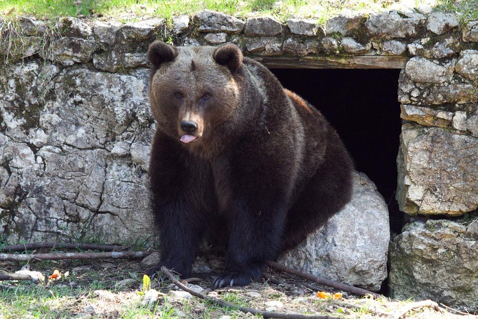 Bear Cheyenne Mountain Zoo