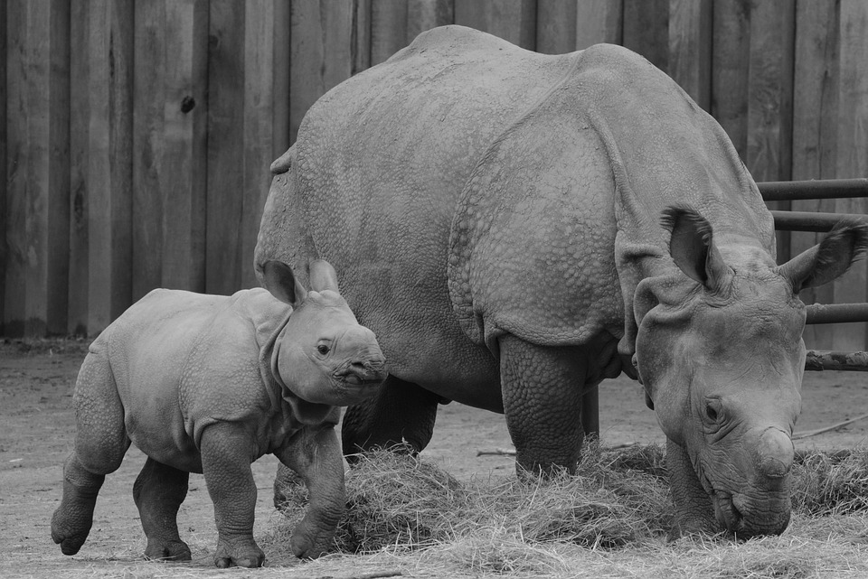 rhino-1304232_960_720.jpg