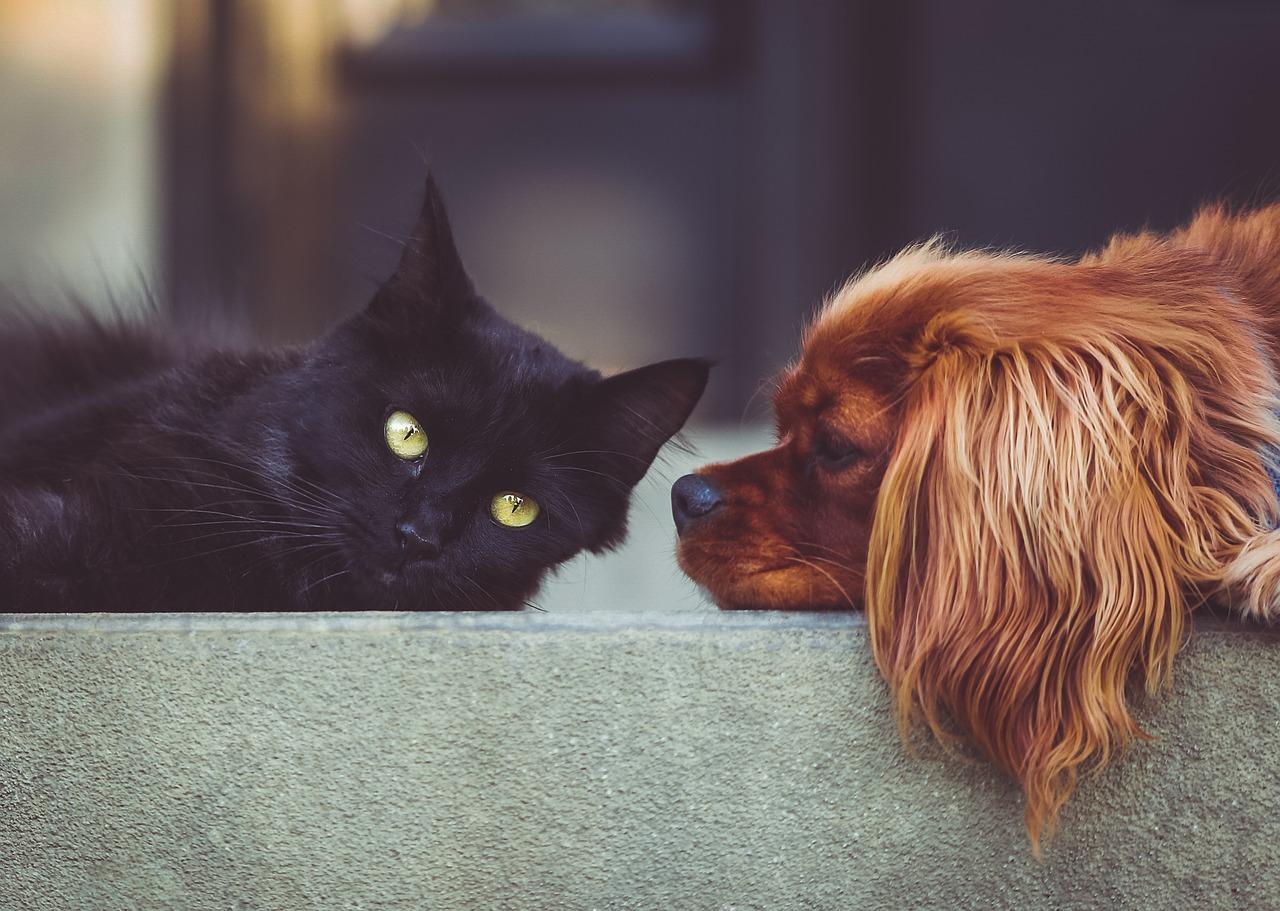 Pet insurance in Colorado Springs