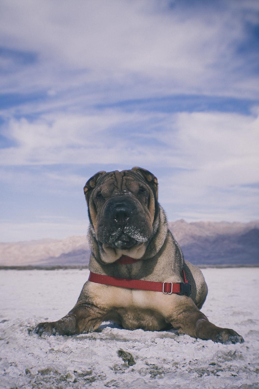 Fuji, VSCO Film, and the Salton Sea — Stephen Ip | Travel