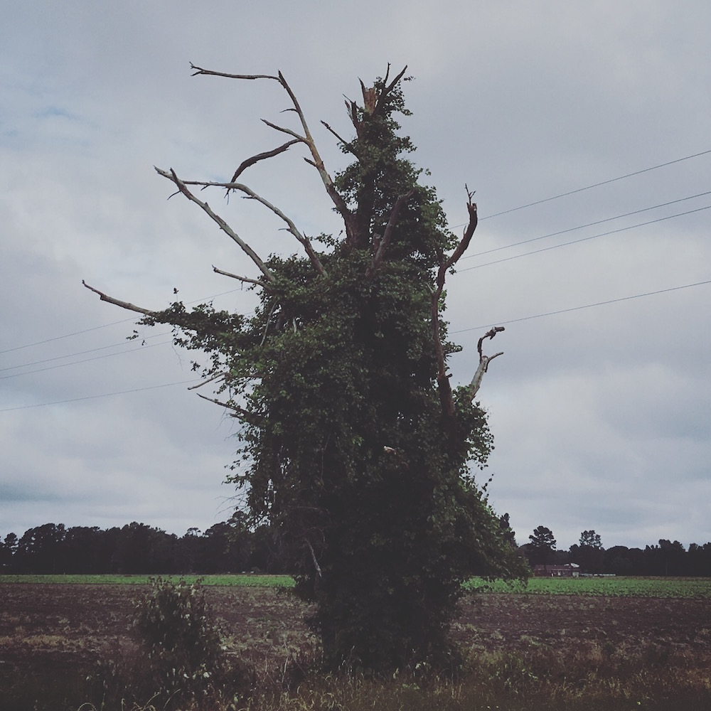 Two-lane highways afford opportunities to stop and photograph things like this cool tree.