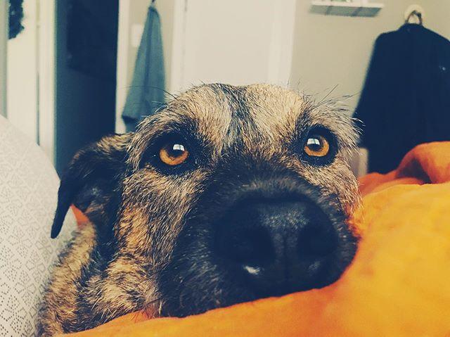 Happy National Dog Day to my sweet little brat. 🐶🥰❤️ #dog #dogs #puppy #puppylove #dogsofinstagram
