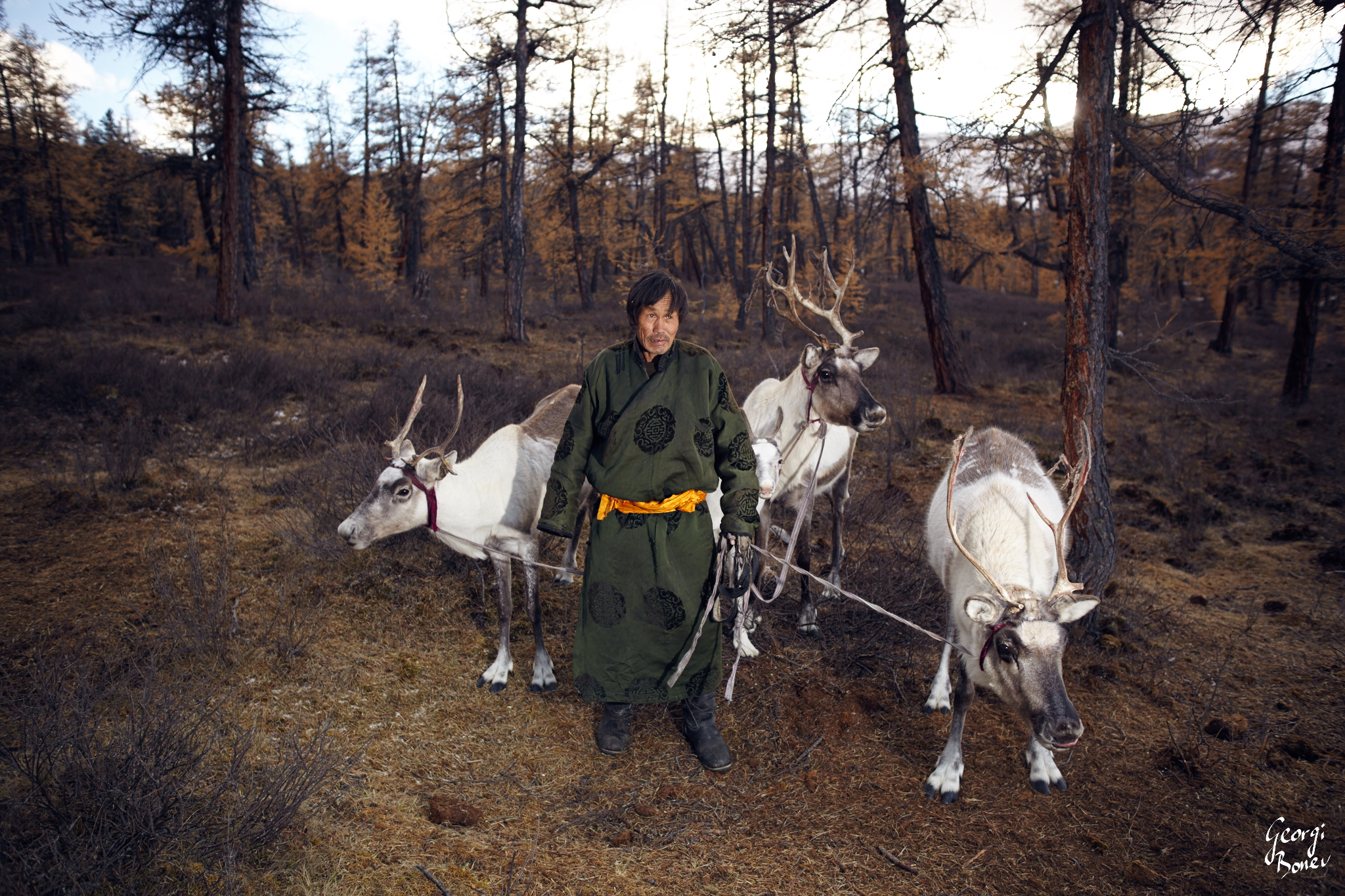 TSAATAN ELDER WITH HIS REINDEERS IN THE STEPPES NEARBY SIBERIA
