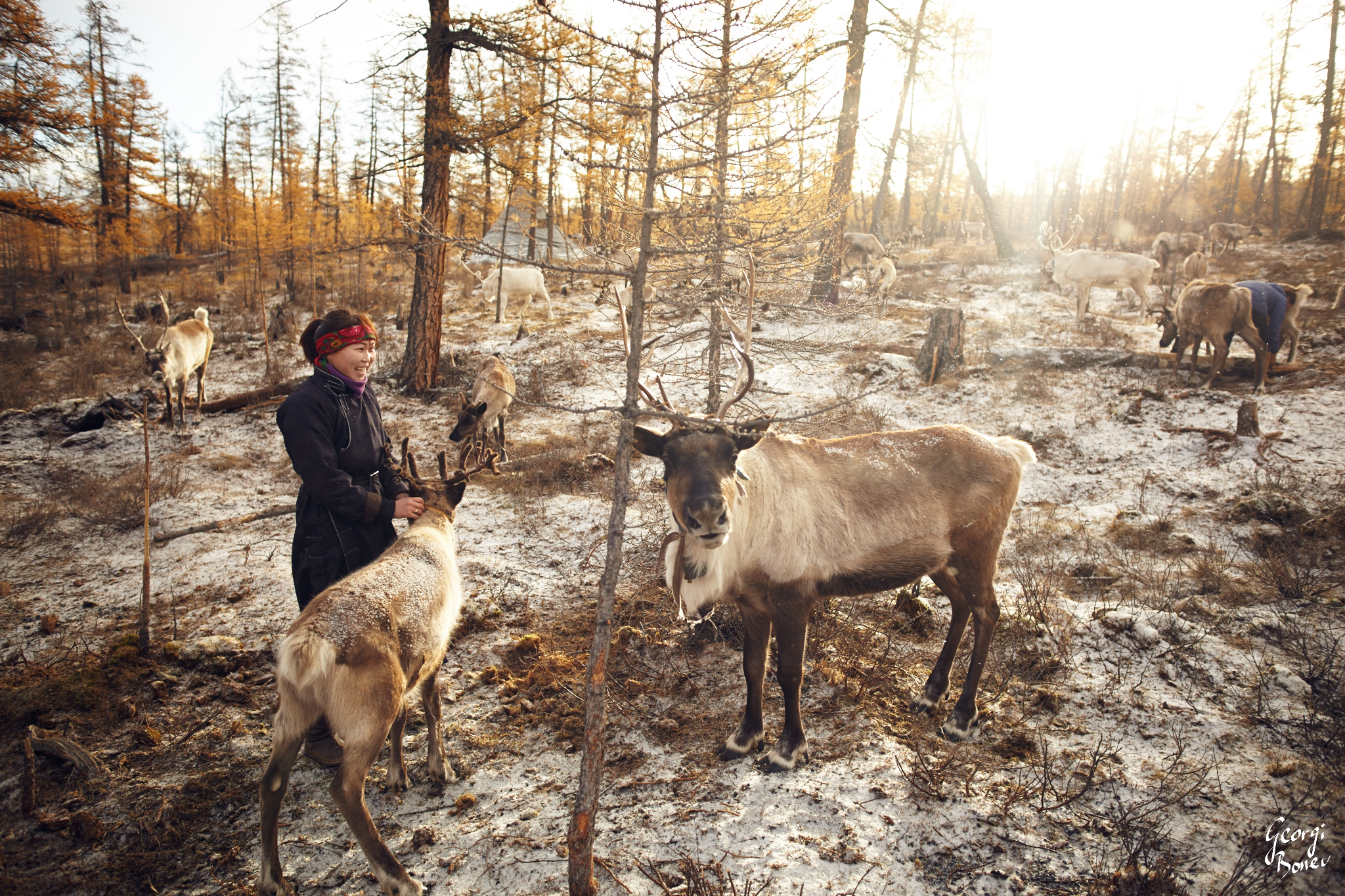 NARA AND HER REINDEER IN THE EARLY MORNING NEAR THE BORDER OF SIBERIA, MONGOLIA