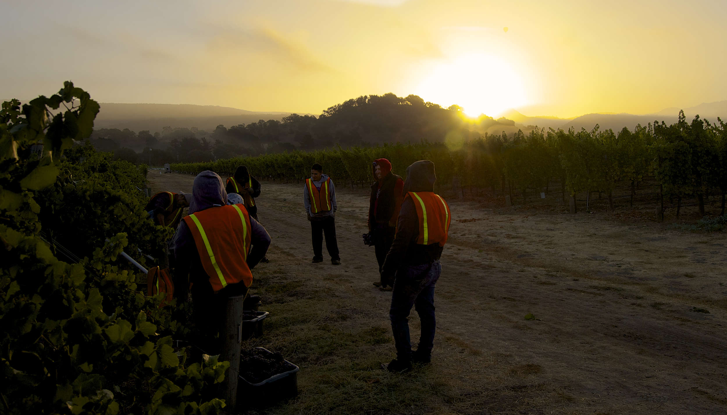 The harvest crew takes a break while waiting for the tractor to bring more bins. This is the first day of the Cornerstone Cellars 2012 Napa Valley harvest and they're picking Oakville Pinot Gris.