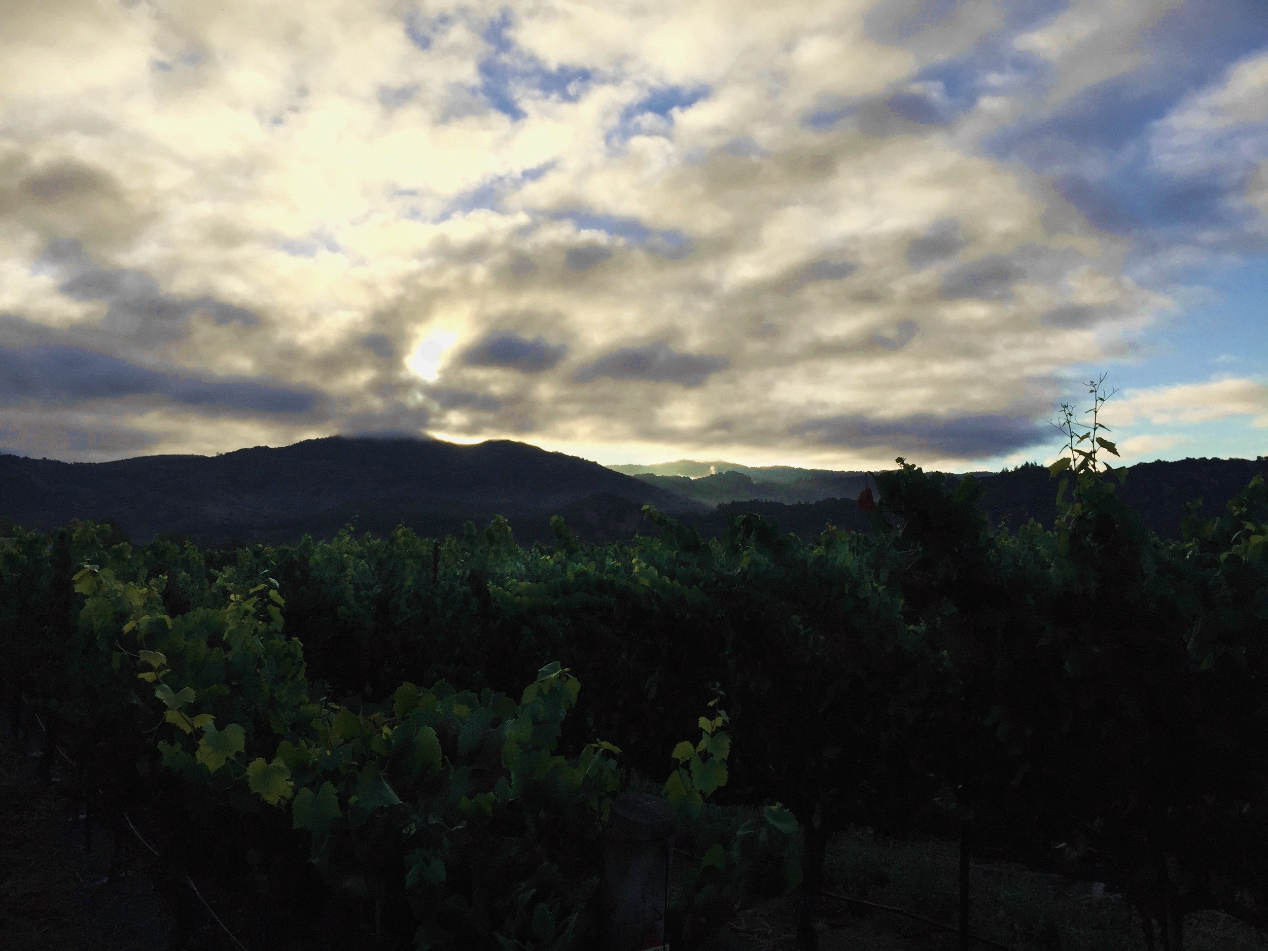 Dawn in the Napa Valley Vineyards of Yountville. The clouds over Atlas Peak brought us no rain.