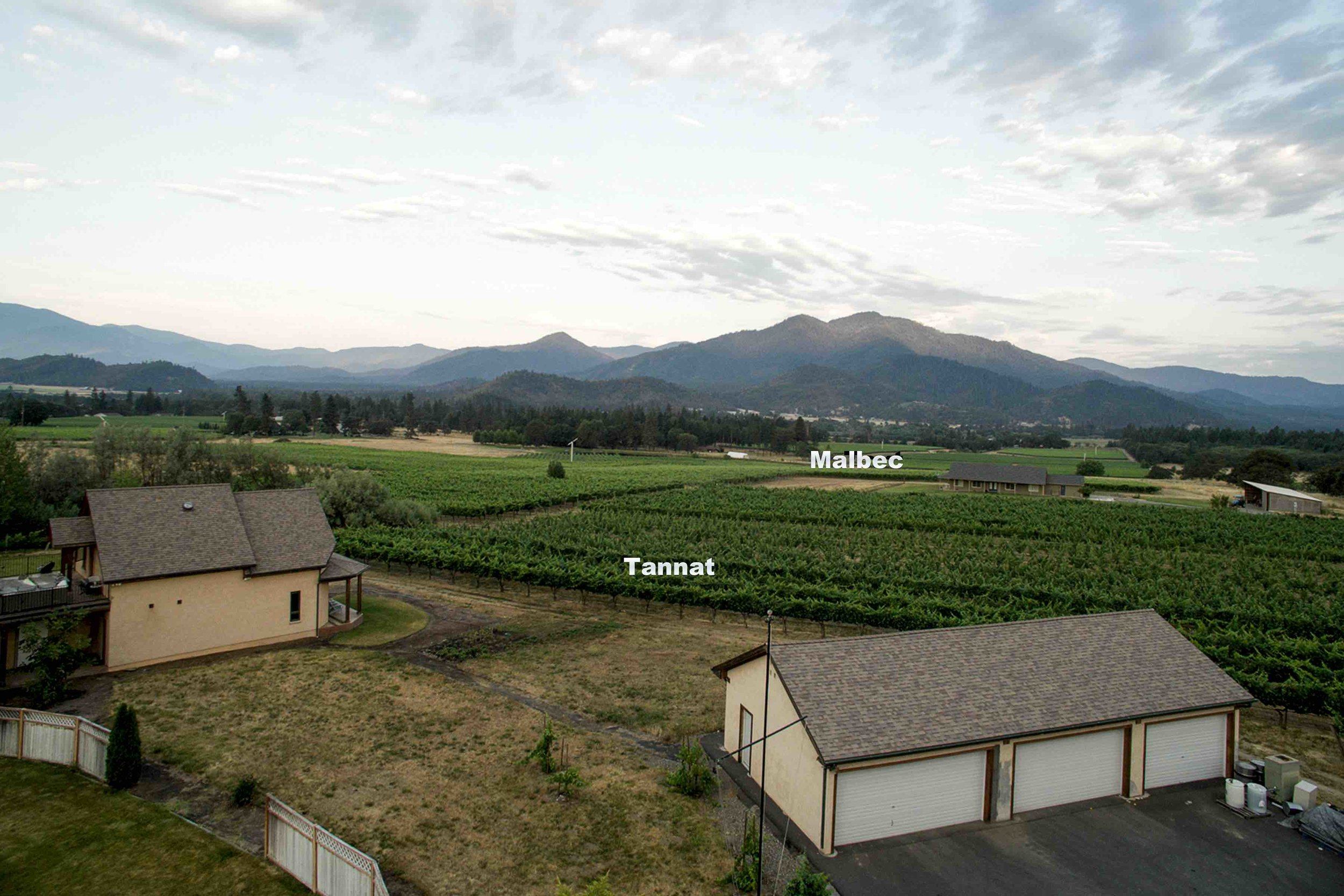Troon Tannat and Malbec blocks looking west from the winery.
